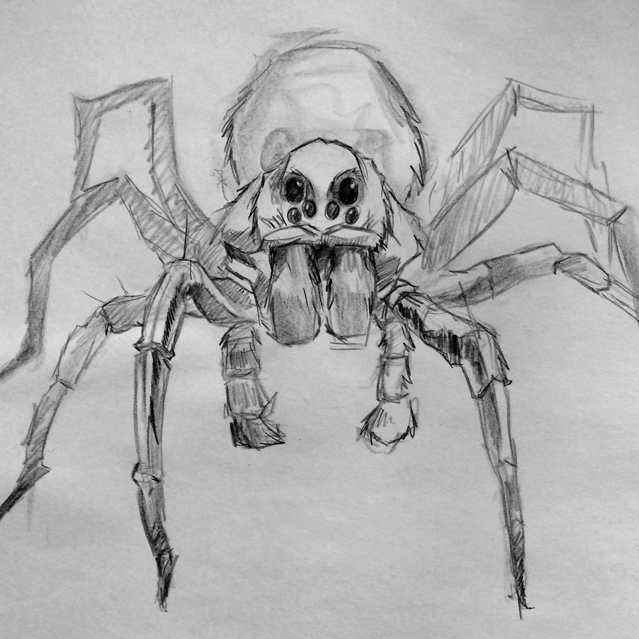 qq_spider_portrait